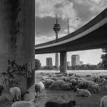 Düsseldorfer Menuette