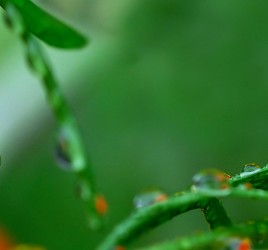macro panorama water drop 25