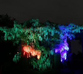Illuminated Bines