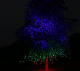 Tree Whispering In The Dark