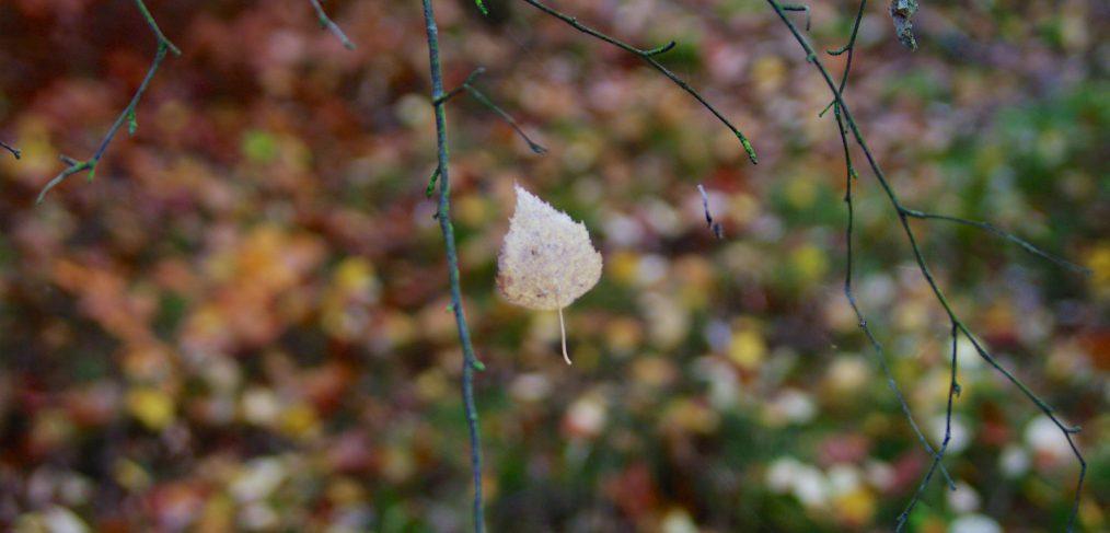 Magie des Herbstes