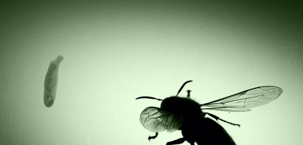 A wasp waits