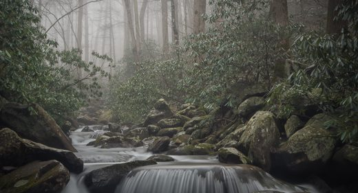 Smoky Day on LeConte Creek